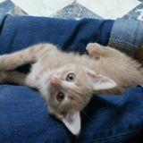 Aslan, Chaton  à adopter