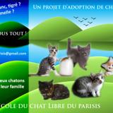 Nos chatons à l'adoption, Chaton  à adopter