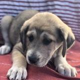 Tilda, Chiot  à adopter