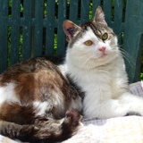 Ary, Chat  à adopter