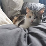 Lilou, Chat à adopter