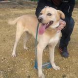 Sagat, Chien à adopter