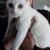 Neige, Chat gouttière à adopter