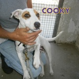 Cooky, Chien  à adopter