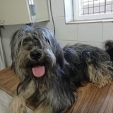 Belka, Chien  à adopter