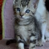 Keanù, Chaton  à adopter