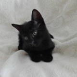 Eliott, Chaton à adopter