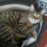 Leia, Chat à adopter