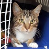 Nabi, Chat à adopter