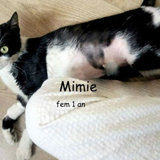 Mimie, Chat à adopter