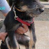 Frimousse, Chiot  à adopter