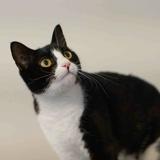 Monya, Chat  à adopter
