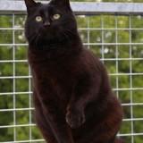 Myabella, Chat gouttière à adopter