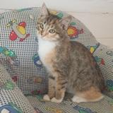 Nina, Chaton à adopter