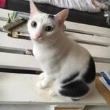 Sanka, Chat  à adopter