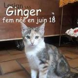 Ginger, Chaton à adopter