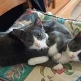 Juju et lili, Chaton  à adopter