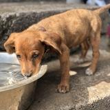 Ollina, Chiot à adopter