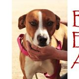 Bea, Chien à adopter
