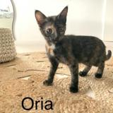 Oria, Chaton à adopter