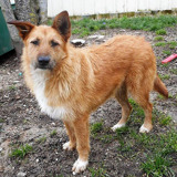 Toffee, Chien à adopter