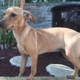 Anka, Chiot à adopter
