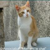 Iroussi, Chat européen à adopter