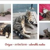 Adoption Chat Vendee