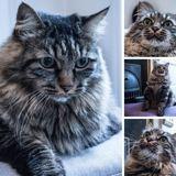 Touffu, Chat à adopter