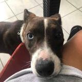 Jazie, Chien à adopter