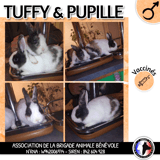 Tuffy et pupille, Animal à adopter