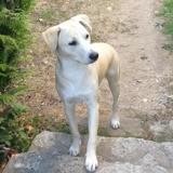 Rocky, jeune mâle croisé, Chiot à adopter