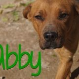 Abby, Chien à adopter