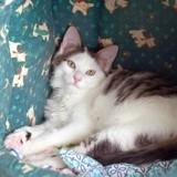 Oxlay, Chaton à adopter