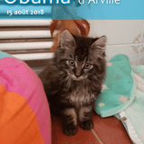Obama d'arville, Chaton à adopter