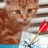 Optimus d'arville, Chaton à adopter