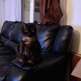 Haji, Chat à adopter