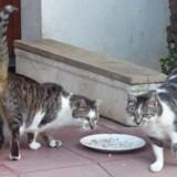 Joukette et jouky, Chat à adopter