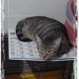 Lizou, Chat à adopter