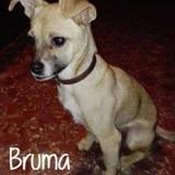 Bruma, Chiot à adopter