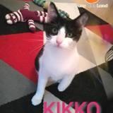 Kikko, Chaton gouttière à adopter