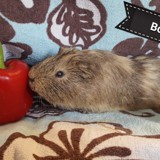 Boca, Animal à adopter