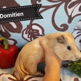 Domitien, Animal à adopter
