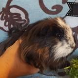 Celestin, Animal à adopter