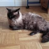 Elyos, Chat à adopter