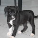 Laya, Chiot à adopter
