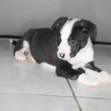 Electra, Chiot à adopter