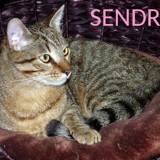 Sendry tout jeune, Chat à adopter