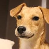 Kila (adoptée), Chien à adopter