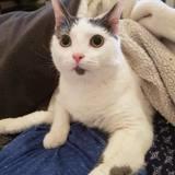 Kokou, Chien à adopter